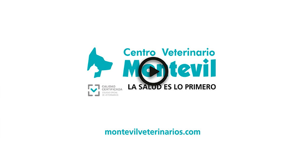 montevil link video movil
